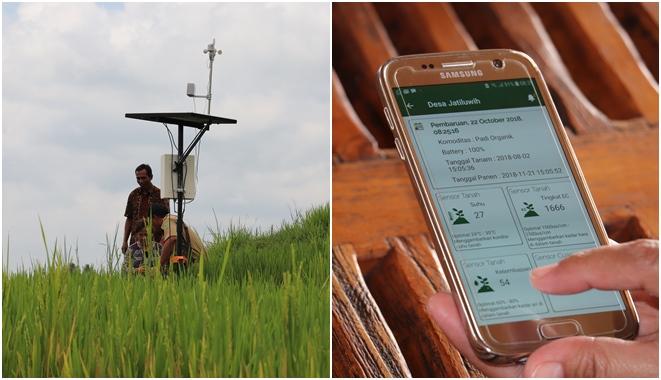 Para Petani di Indonesia